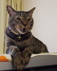 ちょっとアンタ - キジトラ猫のトラちゃんダイアリー