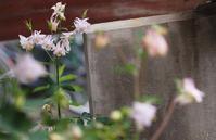 6月6日今日の写真 - ainosatoブログ02