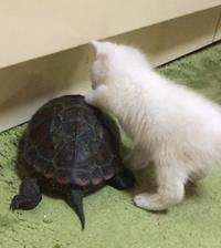 ネコとカメの話 - 楽園生活