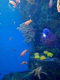 葛西臨海水族園:「伊豆七島の海1」①~海のなかのお花畑 - 続々・動物園ありマス。