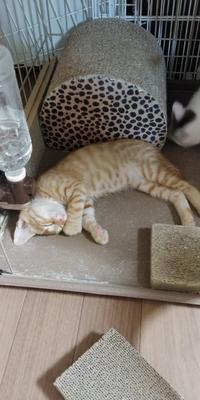 仔猫の日常・パート17 - 青梅ニャンだふる☆Life