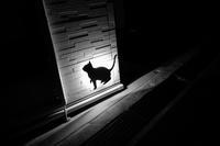 猫 / X70 - minamiazabu de 散歩 with FUJIFILM