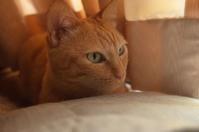 「たびたび猫の話題で恐縮ですが」 - もるとゆらじお
