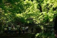 勝尾寺Vol.2 - 今日の空+α2