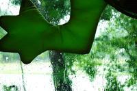 クリの花と梅雨入り・・・朽木西小学校の地域訪問 - 朽木小川より 「itiのデジカメ日記」 高島市の奥山・針畑からフォトエッセイ