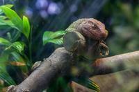 ガラパゴスゾウガメ・グリーンイグアナ - あだっちゃんの花鳥風月