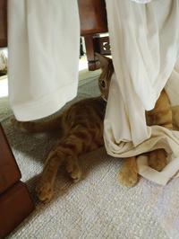 昨日の洗濯物 - すみやのひとり言・・・