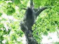 森のこっこ - こもれびの森
