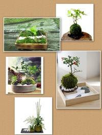 苔玉で箱庭作り ワークショップ - ナチュラル キッチン せさみ & ヒーリングルーム セサミ