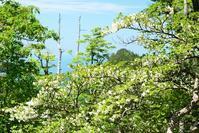 原生林の森楊枝の森 - 峰さんの山あるき