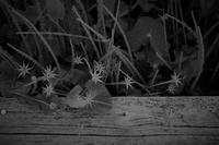 花の変身 - フォトな日々