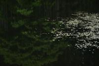 湖面 - フォトな日々