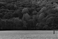森の賑わい - フォトな日々