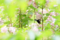 **花園** - こころいろ*photo