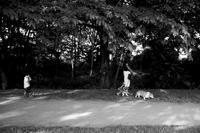 kaléidoscope dans mes yeux2019半径500メートルの情景#87 - Yoshi-A の写真の楽しみ