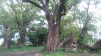 巨木の森 - おでかけメモランダム☆鹿児島