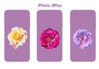 iPhone 透明カバー用画像 - 写真で楽しんでます! スマホ画像!
