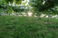 てんてこ舞い田んぼの景色 - ~葡萄と田舎時間~ 西田葡萄園のブログ
