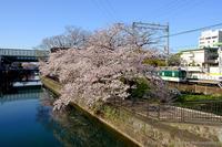 京阪藤森駅付近の桜と… - ぴんぼけふぉとぶろぐ2