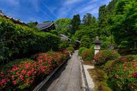 栄摂院のサツキ(金戒光明寺塔頭) - 花景色-K.W.C. PhotoBlog