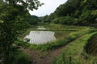 ■梅雨入りした谷戸で19.6.8(ミドリシジミ、ルリシジミ、キタキチョウ) - 舞岡公園の自然2