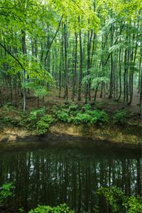 梅雨入り - 松之山の四季2