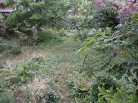 雨の午後 - 自然農☆☆☆菜園日記