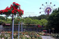 隣県のバラ園へ② - my FHOTO
