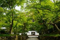 興聖寺 - Deep Season