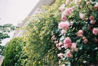 花の季節 - またいつか旅に出る