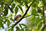 可愛い・・・キビタキ給餌風景 - 鳥と共に日々是好日