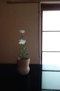 初夏の花 - g's style day by day ー京都嵐山から、季節を楽しむ日々をお届けしますー