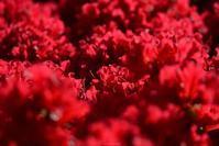 赤 - 今日の空+α2