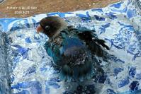 水浴びB.Bの記録(5月23日) - FUNKY'S BLUE SKY