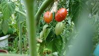ささやか農園に夏がやってきた - on-CO&CHI-cin 温故知新2