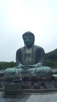鎌倉あじさいとシラス丼の旅 - こころの万華鏡