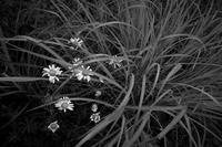 natural arrangement - フォトな日々