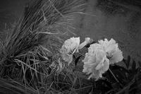 畔で咲く - フォトな日々