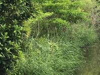 2019.6.9自治会の若い人たち有志の斜面の草刈でした。 - 奈良 京都 松江。 国際文化観光都市  松江市議会議員 貴谷麻以  きたにまい
