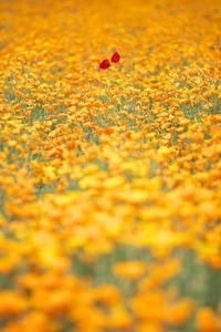 オレンジと赤と - Today's one photograph