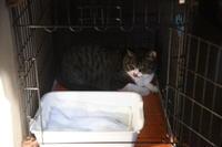 強面ビビリ王子の家猫修業記その22新年には新しいことを - りきの毎日