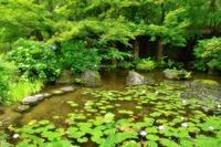 大山崎山荘にて - Mafuyukamera's Blog