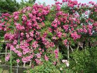 往く言葉が美しいと来る言葉も美しい - 瑠璃色の庭