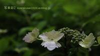 植物園に行く6月-3 - 写楽彩2