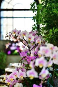 花と器のハーモニー2019Jeux de Fleurs - GreenLife