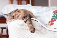 エキサイトブログが表示されない - きょうだい猫と仲良し暮らし