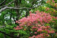 躑躅咲く那須へ - 四季折々