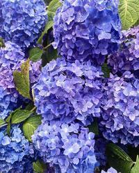 梅雨入りまだ遠し。 - 高知市初月(みかづき):山陽ハイツのブログ