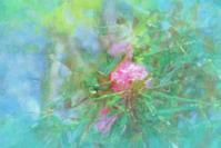 奥日光湯の湖 4 - 光 塗人 の デジタル フォト グラフィック アート (DIGITAL PHOTOGRAPHIC ARTWORKS)
