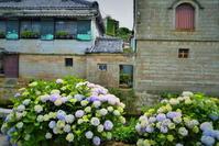 紫陽花咲く古い町並み - 天野主税写遊館